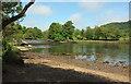 SX8061 : River Dart at The Weir by Derek Harper