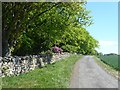 NY9368 : Country road and woodland near Crag House by Oliver Dixon