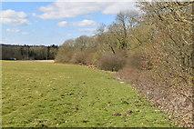 TQ6043 : The edge of Well Wood by N Chadwick