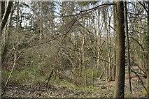 TQ6042 : Woodland by North Farm by N Chadwick