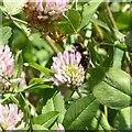SK6143 : Gedling Country Park Wildlife – 7 by Alan Murray-Rust