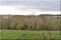 TQ6039 : Siseley Wood by N Chadwick