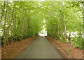 NH5052 : Beech avenue, Wester Urray by Craig Wallace