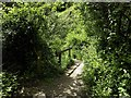 SX9150 : The footpath to Pudcombe Cove by Steve Daniels