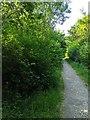 TF0820 : Bushes by the path by Bob Harvey