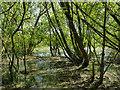 SE3423 : Stanley Marsh nature reserve: marshland by Stephen Craven