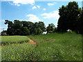 SP1604 : Tumulus near Barrow Elm Farm by Vieve Forward