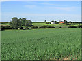 TL3958 : Towards Jaggard's Farm by John Sutton