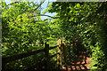 SX8963 : Path past Cockington Court Orchard by Derek Harper