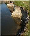 SX8574 : Teign riverbank by Derek Harper