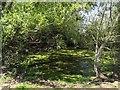 SK5226 : Dew Pond West Leake by John Beniston