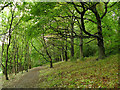 SE3137 : Row of trees in Gledhow Valley Woods by Stephen Craven