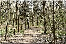 TQ5944 : Tunbridge Wells Circular Walk, Castle Hill Woods by N Chadwick