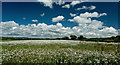 SS5032 : A field of leucanthemum vulgare or oxeye daisy by Roger A Smith