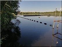 TQ2187 : Marina on the Welsh Harp Reservoir, West Hendon by David Howard