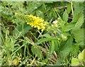SK6143 : Gedling Country Park Wildlife, 5/6/2020 – 14 by Alan Murray-Rust