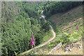 SO2003 : Forestry track, Cwm Big by M J Roscoe