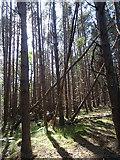 NJ3165 : Tree Trunks by Anne Burgess