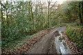SS4922 : Lane near Huntshaw Mill by Derek Harper