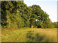 TL5602 : Margin on hay meadow, Chipping Ongar by Roger Jones
