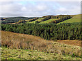 SN7353 : Forest and hill pasture near Esgair Llethr in Ceredigion by Roger  Kidd