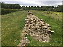 NZ1366 : Hadrian's Wall by Anthony Foster