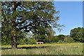 SU7264 : Parkland landscape, Church Road, Swallowfield by Simon Mortimer