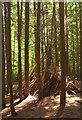 SX8375 : Shelter, Newpark Plantation by Derek Harper