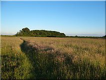 TF0841 : Footpath towards Little Plantation by Ian Paterson