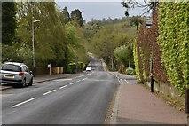 TQ5740 : Culverden Down by N Chadwick