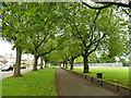SE2632 : Path alongside Green Hill Lane, Wortley by Stephen Craven