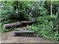 SP5606 : Log bench in the C.S. Lewis Nature Reserve by Steve Daniels