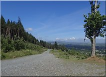 J3630 : Forestry road in Donard Wood affording a fine view of the Slieve Croob Range by Eric Jones