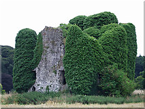 N9473 : Castles of Leinster: Carrickdexter, Meath (1) by Garry Dickinson