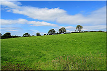 H5366 : Laragh Townland by Kenneth  Allen