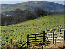 NT1129 : Tweed Valley, Laigh Hill by David Dixon