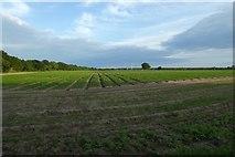 SE6648 : Farmland north of Elvington Airfield by DS Pugh
