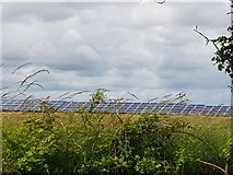 SU9201 : Solar panels viewed over the hedge by Jeff Gogarty