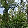 TF0820 : Mixed woodland by Bob Harvey