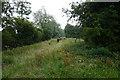SE7828 : Bridleway towards Brow Lane, Balkholme by Ian S