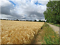 TL5355 : Footpath and a field of barley by John Sutton