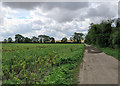 TL5255 : Fulbourn: the edge of the Cambridgeshire Fens by John Sutton