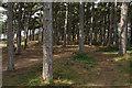 SD2707 : Pine wood near Formby by Bill Boaden
