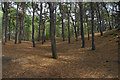 SD2808 : Squirrel Wood by Bill Boaden