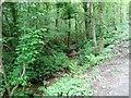NZ0851 : Stream in Howden Wood by Robert Graham