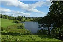 NY3404 : Canada Geese on Loughrigg Tarn by DS Pugh