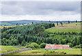 NY9551 : Shildon Plantation by Trevor Littlewood