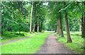 SU9184 : Green Drive, Cliveden by Des Blenkinsopp