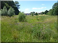 TQ4577 : Knapweed on East Wickham Open Space by Marathon