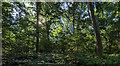 TF0820 : Among the trees by Bob Harvey